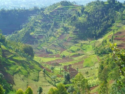 Terraces in Rwanda