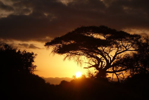 Sunrise over Amboseli