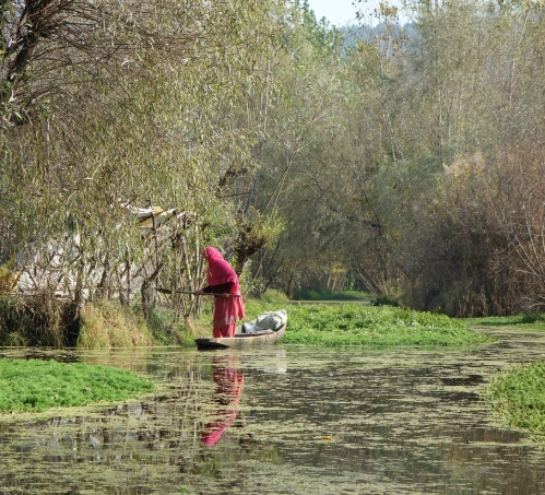 Srinagar backwaters