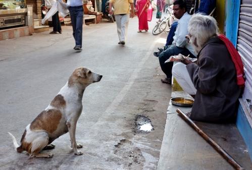 Pushkar Dogs